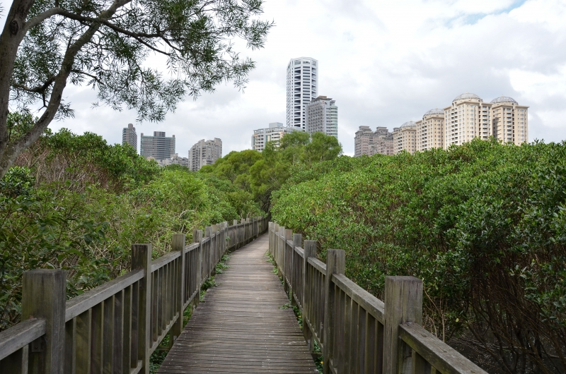 Tamsui mangroves