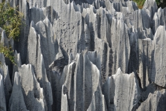 Stone Forest - Shilin